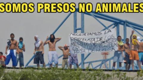 """""""SOMOS PRESOS NO ANIMALES"""": RECLUSOS DE LA CÄRCEL MODELO"""